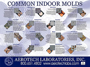 mold and mildew paintpro magazine rh paintpro net