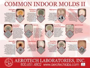 Mold And Mildew Paintpro Magazine