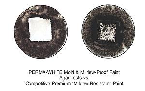 Mold Mildew Resistant Paint Paintpro